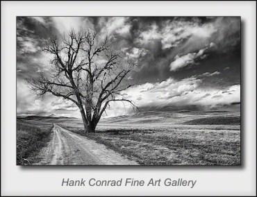 Road Tree @ Wind Cave