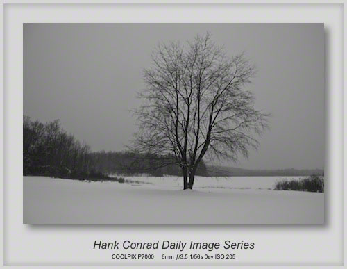 1/27/2013 Lonely Tree