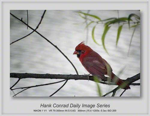 6/30/2013 Cardinal