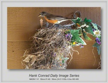 7/07/2013 Young Robins