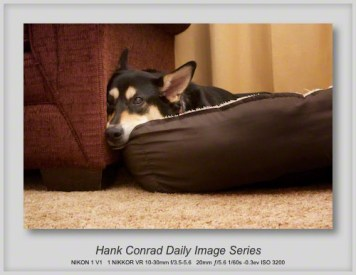 8/27/2013 Comfy Canine