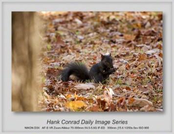10/06/2013 Black Squirrel