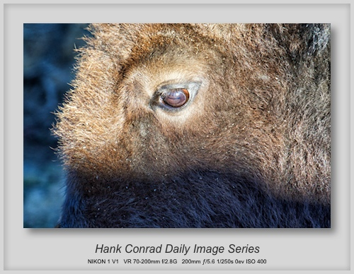 10/27/2013 Eye of a Bison
