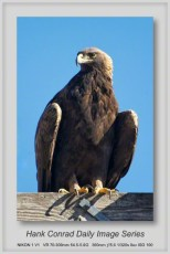 11/06/2013 Young Eagle