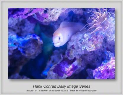 11/27/2013 Fish Tank Eel