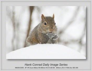 12/15/2013 Gray Squirrel