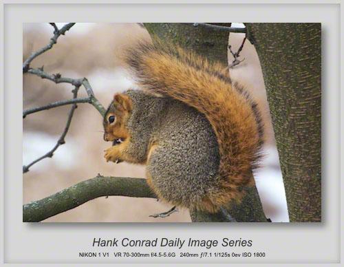 12/31/2013 Gray Squirrel