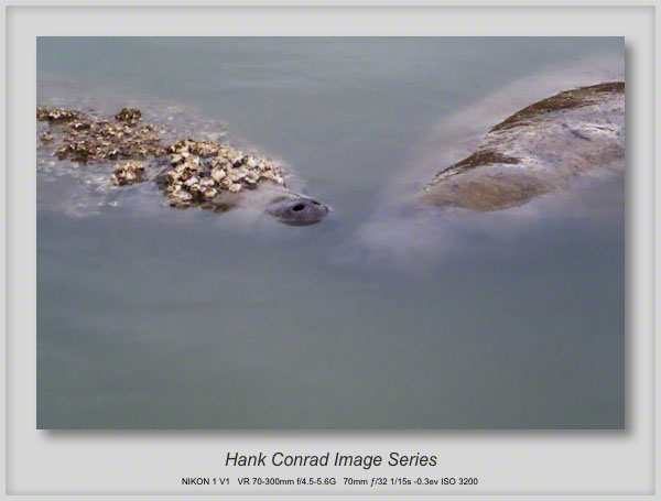 1/30/2014 Florida Manatee