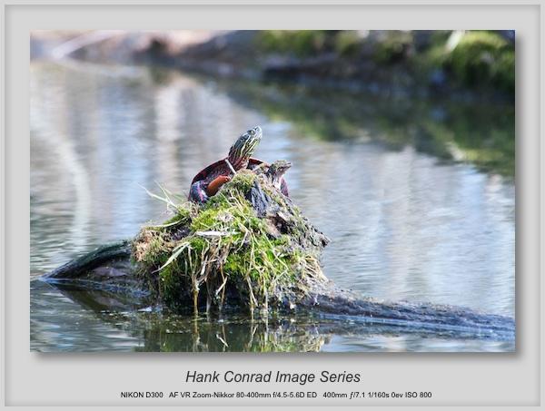 Spring & Turtles