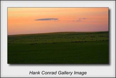 Bison over the Horizon