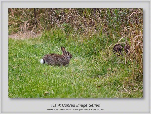 Rabbits are back!