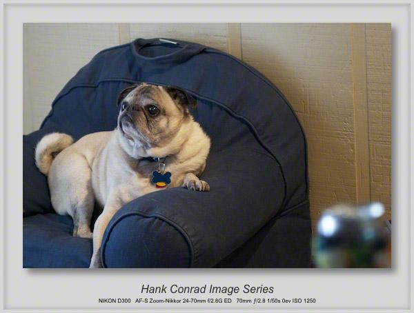 Pug Chair