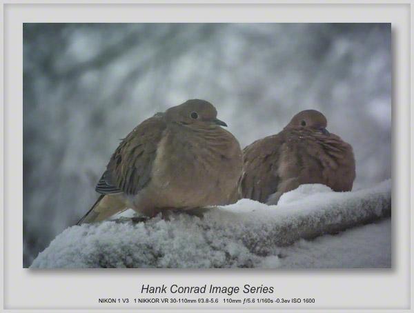 Morning Doves