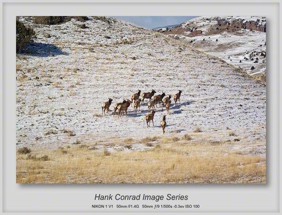 Elk ➠ Upcountry