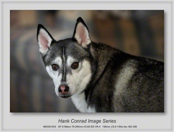 Did You Call: Husky?