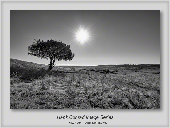 Lone Tree in the Badlands