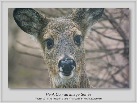 Deer at the Back Door