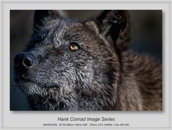 Wet Wolf @ Wolfpark