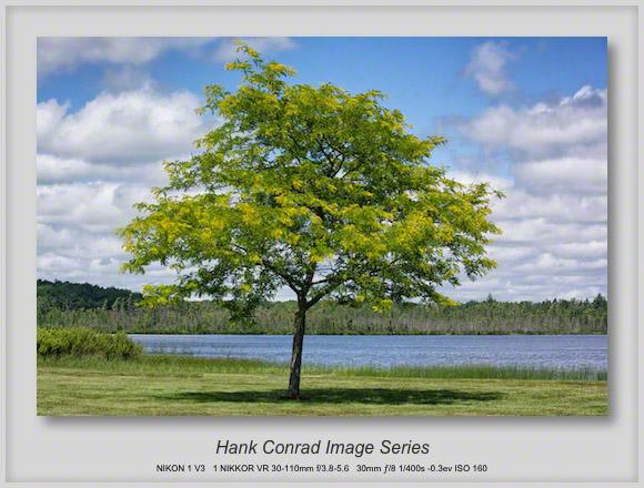 Lone Tree on a Lake