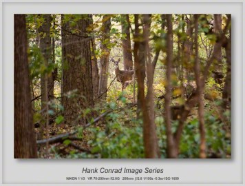 7 Image Story | White-tailed Deer