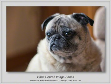 7 Image Story | Pug Alert; Big Dogs Coming
