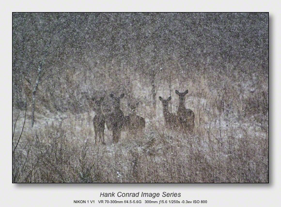 Snow Makes the Image | Curious Deer