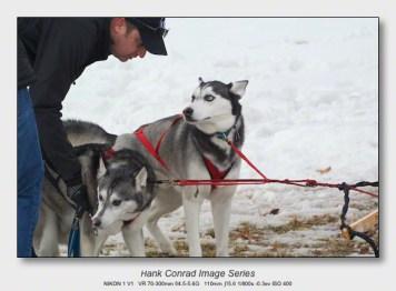 Husky Dogsled Party | Jake & Elwood get Ready