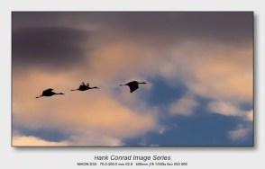 Sandhills on the Platte | Evening Flight