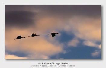 Sandhills on the Platte   Evening Flight