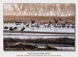 Sandhills on the Platte | Morning Flight