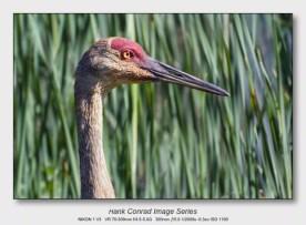 Sandhills on the Platte | Beautiful Crane