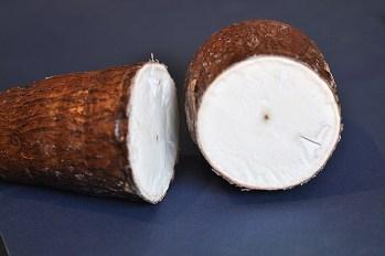 cassava root cross section