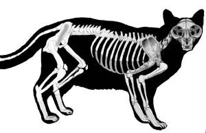 cat bones NO callouts