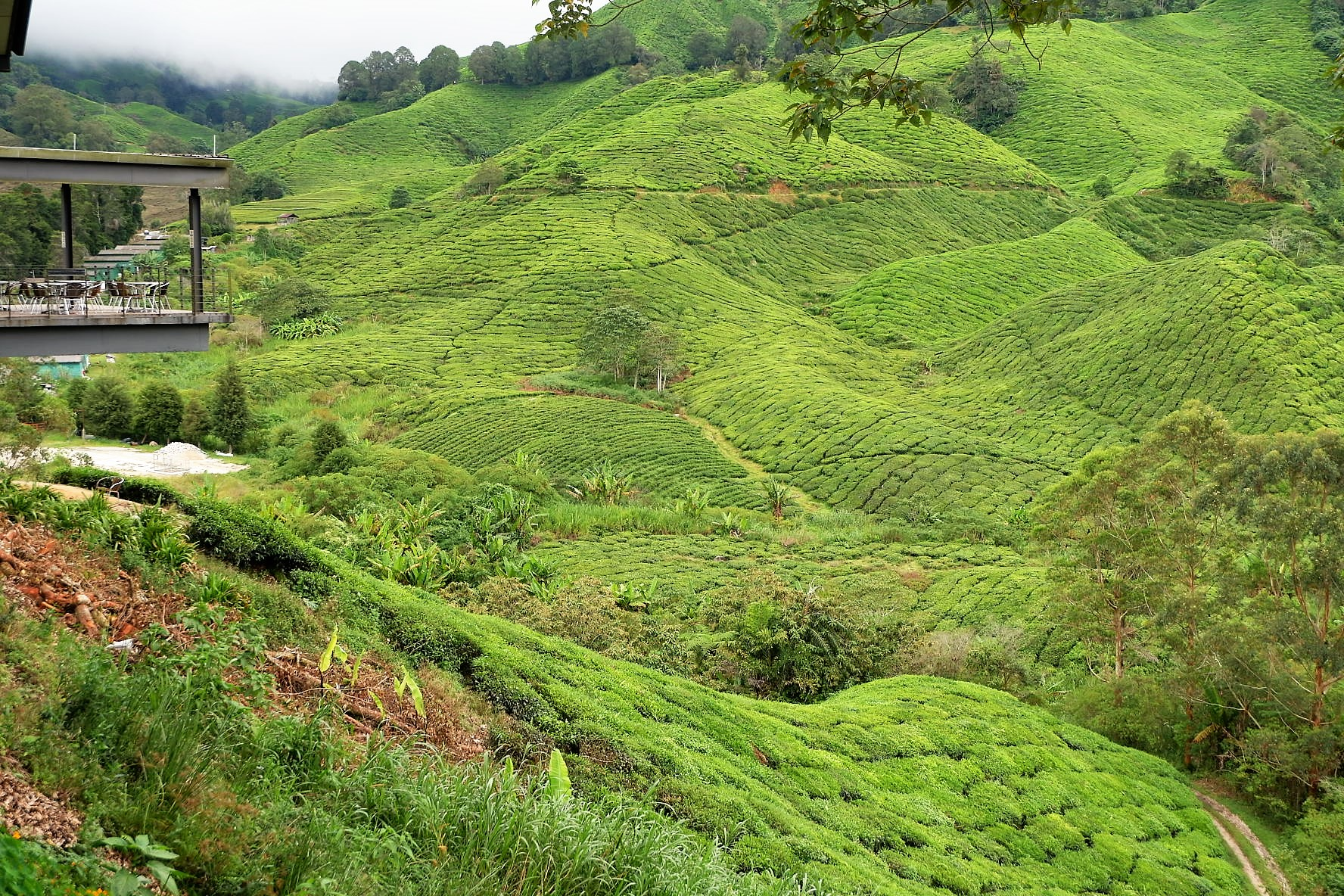 IMG 5241 - A Getaway in Cameron Highlands that will gives you more than you deserve!