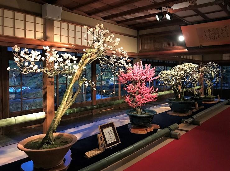 ★2018長浜盆梅展ライトアップ