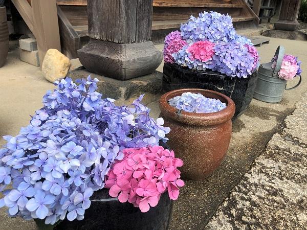 202006奈良・般若寺。本堂入口に飾られたあじさい