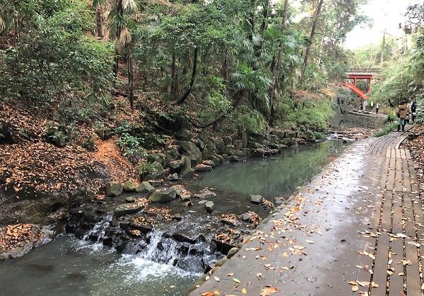 202012等々力渓谷の森林浴でストレス解消。渓流も