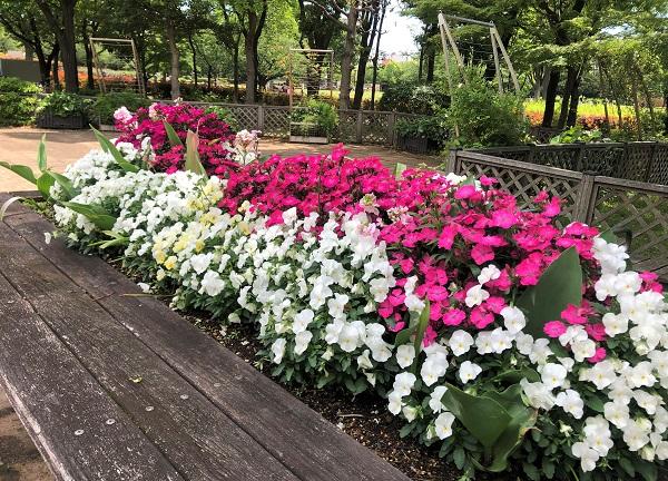 202105江東区・木場公園に植えられた花