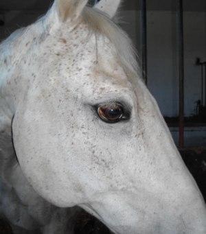 Auge von Lennox
