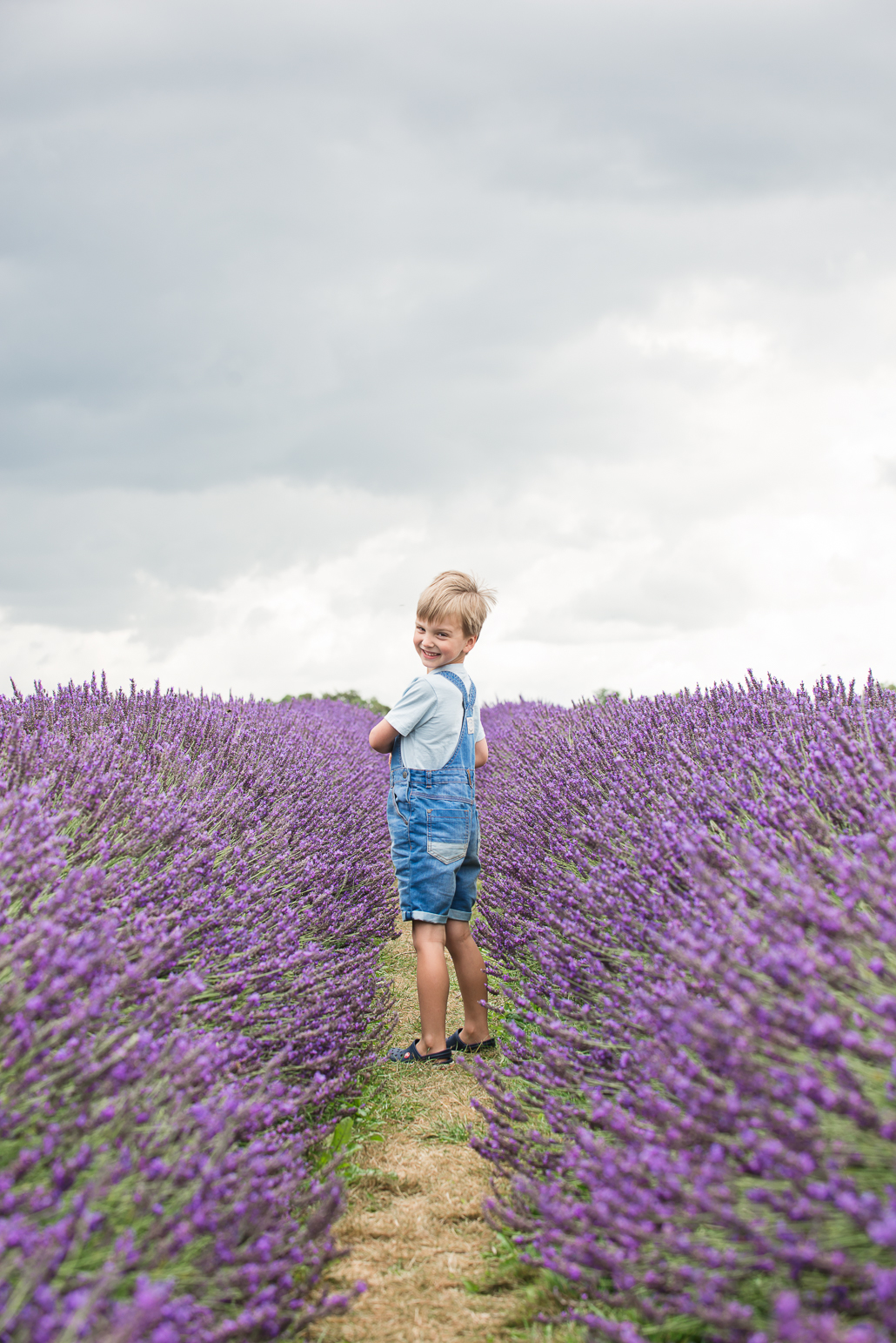 little boy in lavender field, family portraiture and photographing children