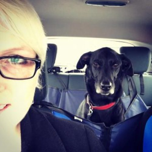 Moose bed - Tips for Road-tripping with a dog