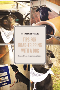 Tips for Road-Tripping with a Dog - HH Lifestyle Travel