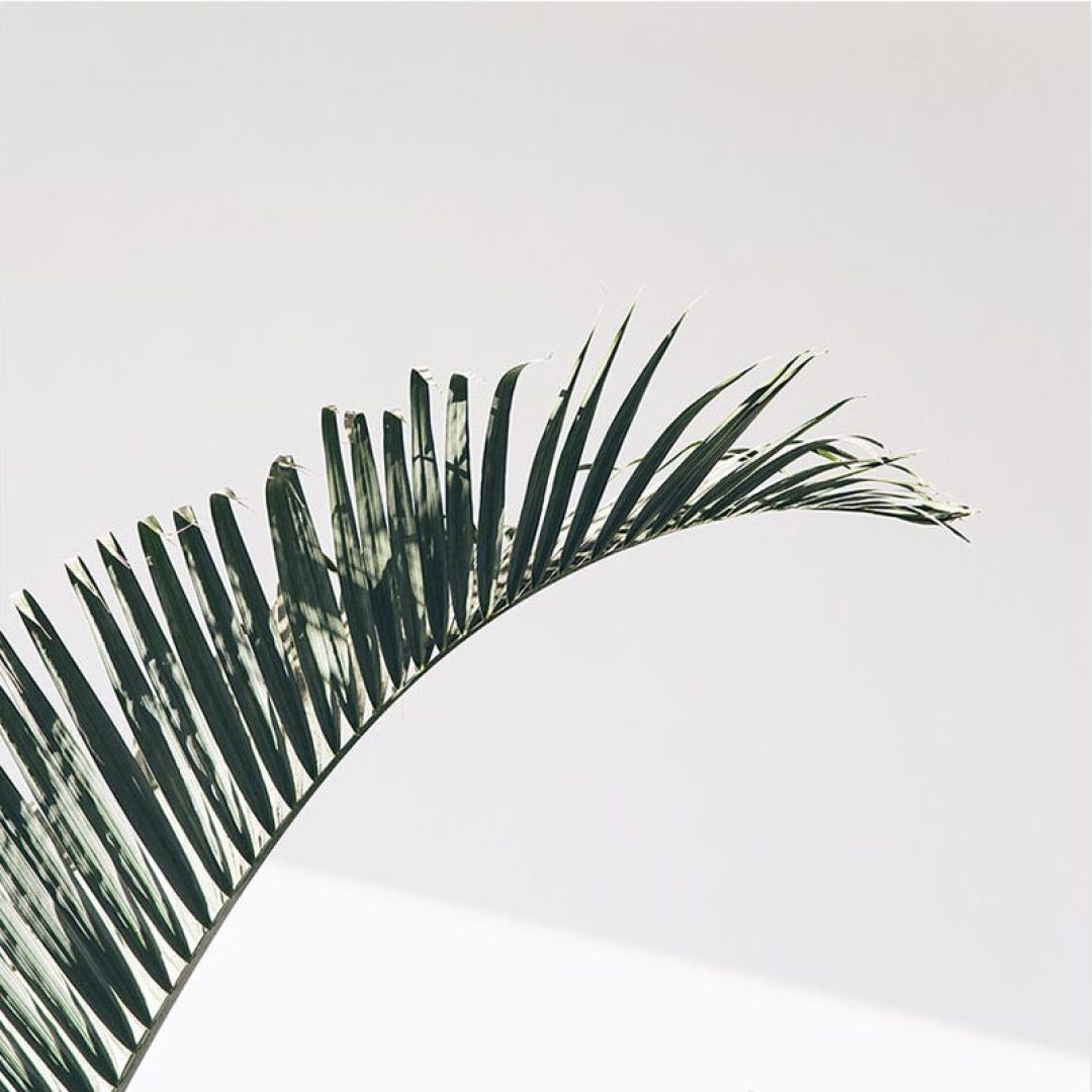 Post Collective | Leaf by @oljaryz / Olja Ryzevski