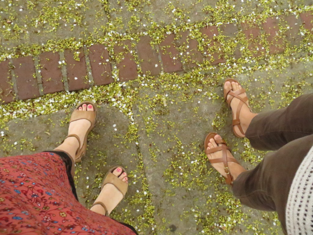 treading fallen blossoms