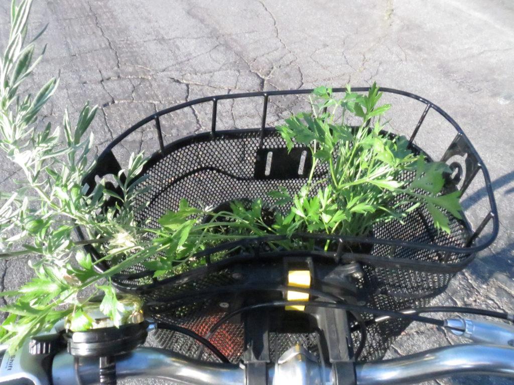 herbs in the bike basket