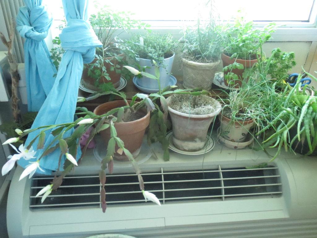 window full of herbs