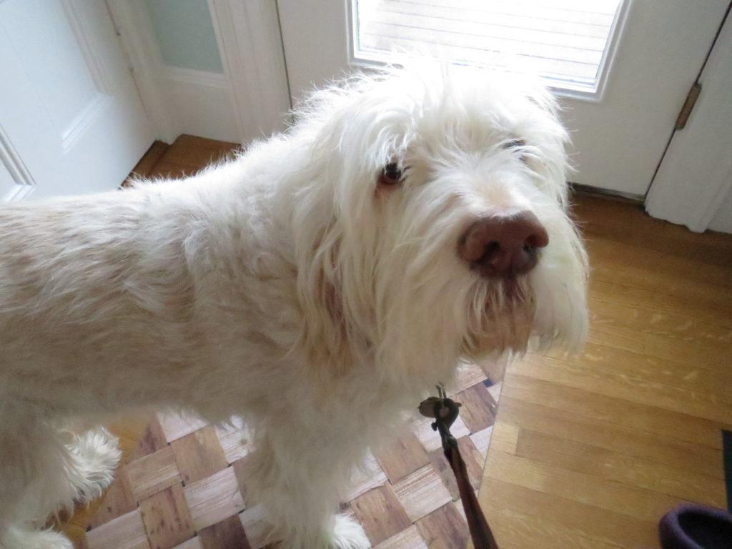 Vespa wants a walk