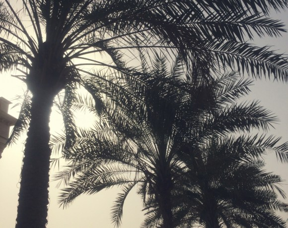 Palm trees, Dubai