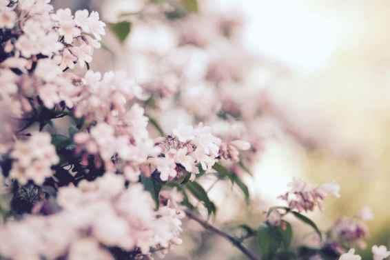 15_Summer