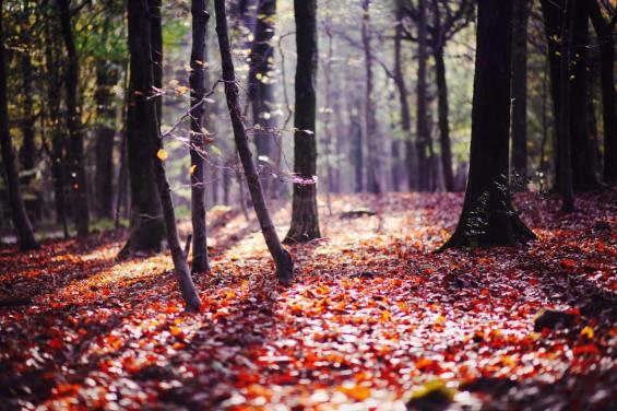 18_Autumn